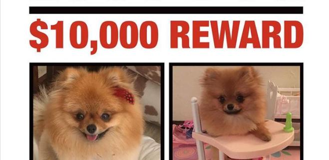 Reward for stolen dog