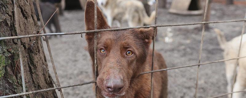 German shepherds rescued
