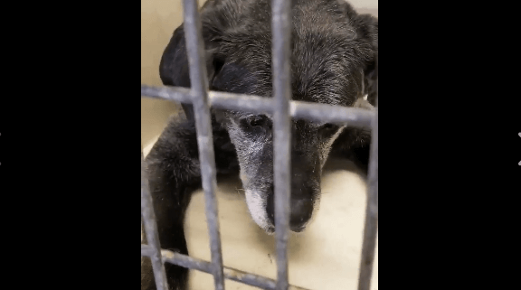 20 year old dog surrendered