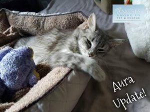 Angels Among Us Update cat