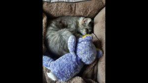 Angels Among Us cat 4