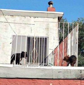 Dog on hot roof 2