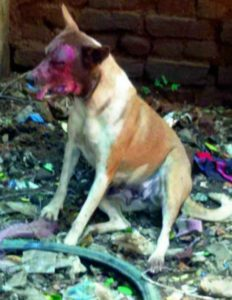 Hyderabad dog hit with acid