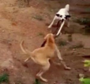 Indian dog kills snake