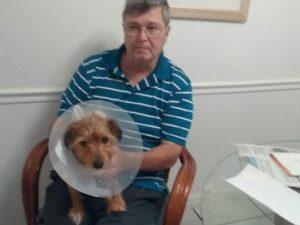 Jasper the dog stabbed