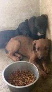 Nueces 3 puppies 3