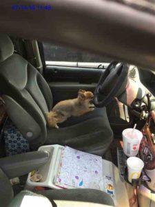 Pomeranian rescued