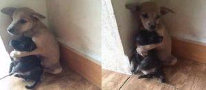 Puppy hugging