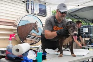 Tennessee ASPCA 2