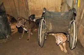 Tennessee ASPCA