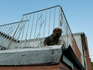 dog on hot roof 3