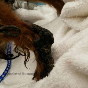 Distraught Dogs Rescued From Scorching Hot Tar Roof In