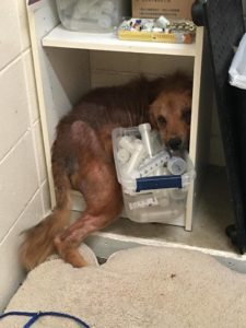 dog saved from euthanasia 2