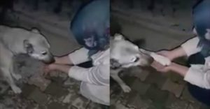 dog thanks girl for giving water