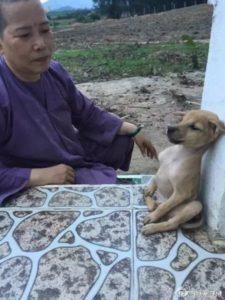 puppy hugging 3