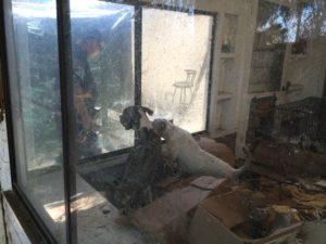 riverside abandoned dogs 4