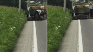 Amish man horse cruelty