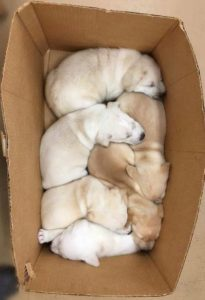 Angels Among us puppies orphaned
