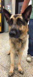 Bruno the van dog