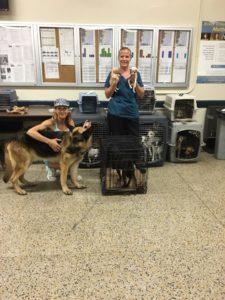 Bruno the van dog 6