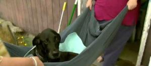 Disabled dog's wheelchair stolen 2