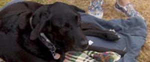 Disabled dog's wheelchair stolen