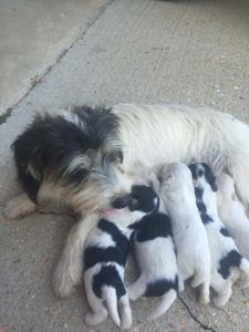 Dog and pups dumped on sidewalk 3