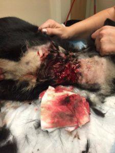 Rescue Dog Jackie