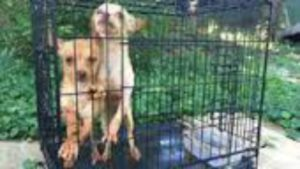 Hartford abandoned dogs