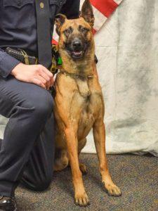 Kingman police dog