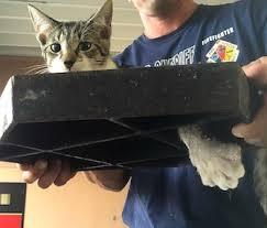 Kitten man hole cover 2