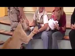 Lion snatches up baby on live tv2