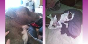 Lucerne Dog deaths alive