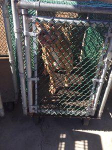 Owner flicks finger at dogs 3