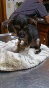 Paulie the pup 3