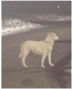 Portland woman dumped dog