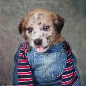 Rubin the puppy