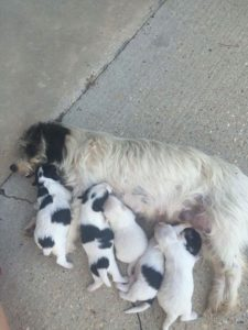 dog and pups dumped on sidewalk