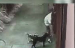 man caught on video dog to get kitten