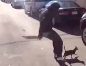 cat-kicker-wedn