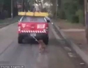 Council workers drag dog in Ar