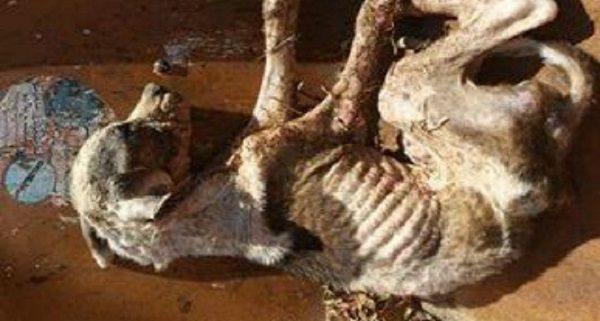 Victim of cruel abuse