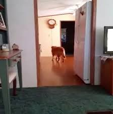 dogs-ghost-appears-2