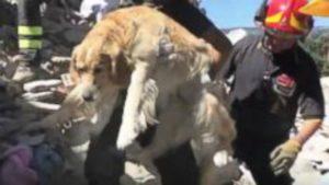 Earthquake dog 2