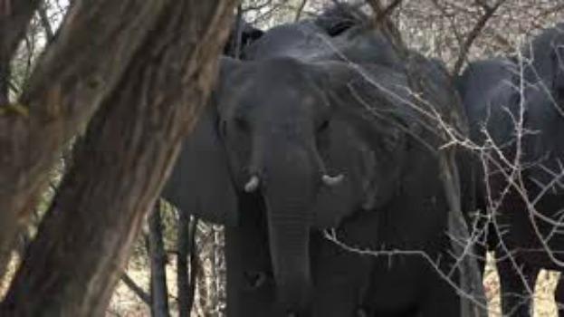 namibia-elephant-hunti...
