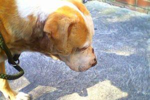 Aggressive Dog Training Peterborough