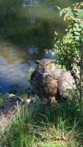 rescued-owl-2