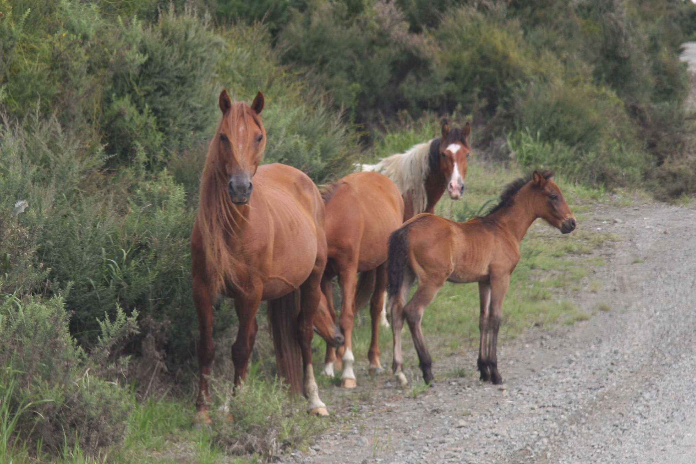 Nearly 45 000 wild horses may be