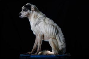 venezuela-dogs-3