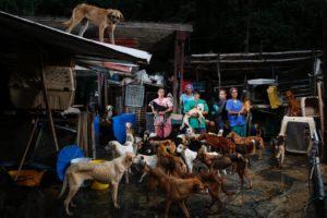 venezuela-dogs